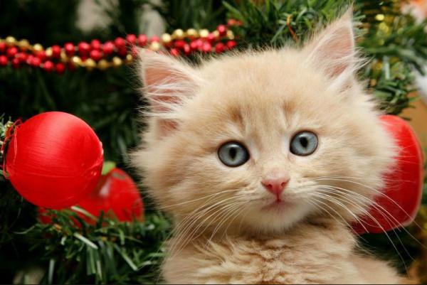 новогодняя елка и котенок