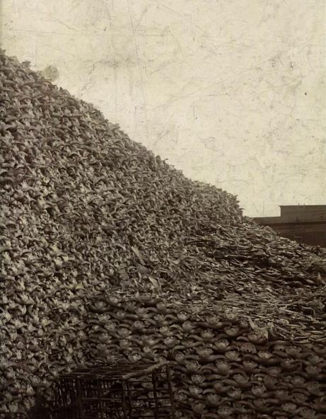 Гора бизоньих черепов